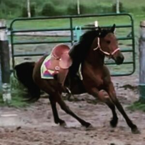Qh mare 3 years old