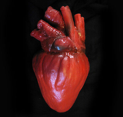 Large Lifesize Human Heart Body Parts Scary Bloody Zombie Halloween Party Prop