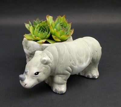 Rhino Planter Terracotta Flower Pot Safari Animal Indoor Outdoor Home Decor](Animal Planters)