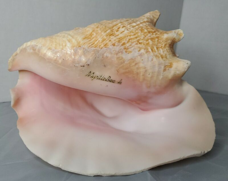 Vtg Myrtle Beach, SC Souvenir Queen Conch Shell. Large seashell tan, pearly pink