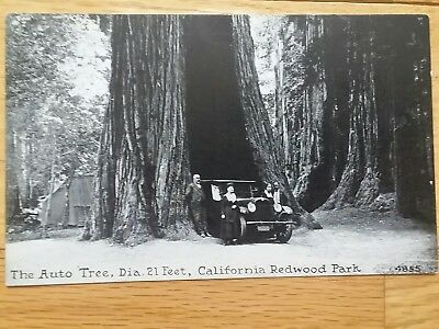 RPPC c. 1920 AUTO TREE, BIG REDWOOD STATE PARK, CALIFORNIA POSTCARD