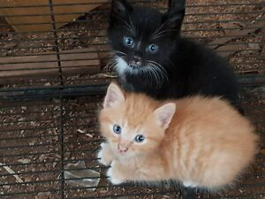 Kittens, free to good home.