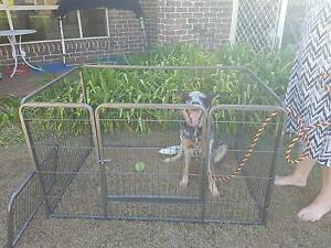 Puppy cage Albany Creek Brisbane North East Preview