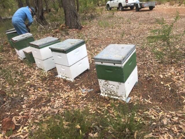 For Sale Bee Hives   Other Appliances   Gumtree Australia ...