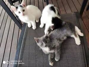 4 month kittens