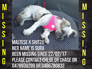 MISSING!!!! SHITZU X MALTESE Glen Eden Gladstone City Preview