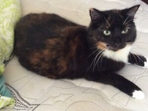 Free to good home 2 year old desexed vaccinated indoor cat Newcastle