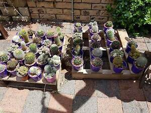 CACTUS & SUCCULENT AND GARAGE SALE - MOVING HOUSE Cornubia Logan Area Preview