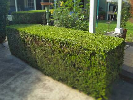 Lawn mowing , Hedge Trimming , Gutter Cleaning and Gardening .
