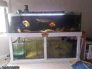 6ft tank aquarium set up Wollongong Wollongong Area Preview