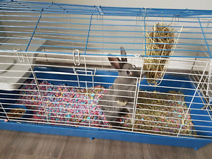 Bunny and cage for sale male 4months old