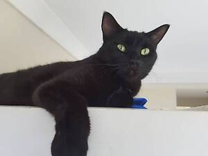 Stunning Marco is looking for a place to call home Redcliffe Redcliffe Area Preview
