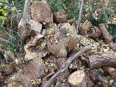 Job Lot of landscaping wood For Sale - Over 50 Large Logs. Great for landscaping