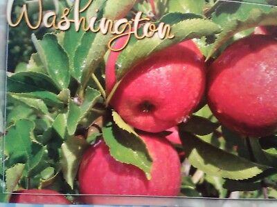 AMAZING BEAUTIFUL POST CARD WASHINGTON APPLES FROM WENATCHEE WASHINGTON