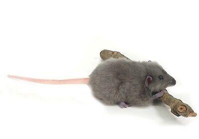 Hansa Toys Gray Rat Mouse 5579 Plush Stuffed Animal Toy New Decor Prop Gift