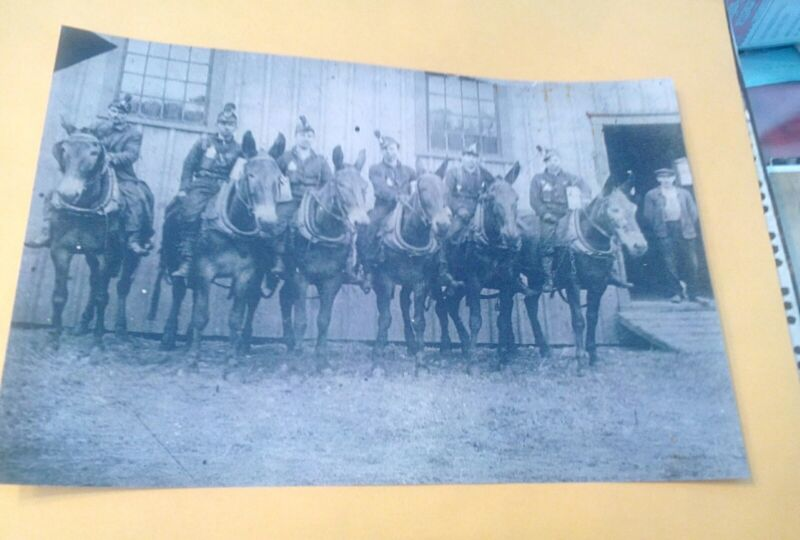 1910 Export PA. Westmoreland Coal Mine Co. Miners On Mules Dinner Buckets Lamps+
