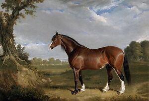 1833- John Frederick Herring, Clydesdale Stallion Horse, 16
