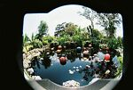 Thrifty Garden