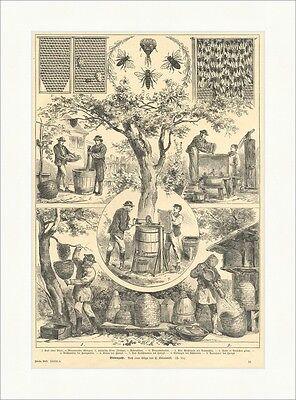Bienenzucht H. Kwiatowski Tiere Imkerei Honig Waben Tiere Baum Holzstich E 8460