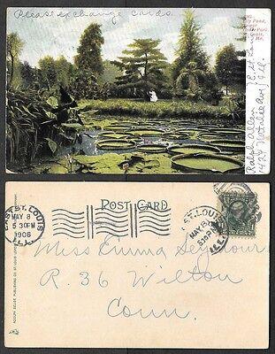 1908 Missouri Postcard   St  Louis   Grove Park   Lily Pond
