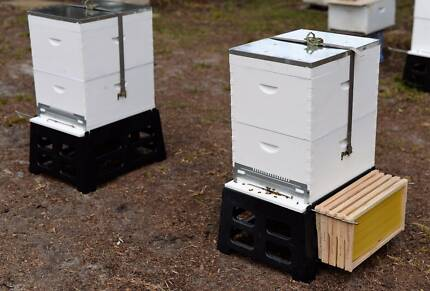 New working beehive with young queen