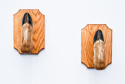 Taxidermy Deer Hoof Gun Rack on Oak Plaques Deer Foot Deer (Deer Gun Rack)