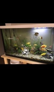 115 Gallon Fish Tank, Everything Included