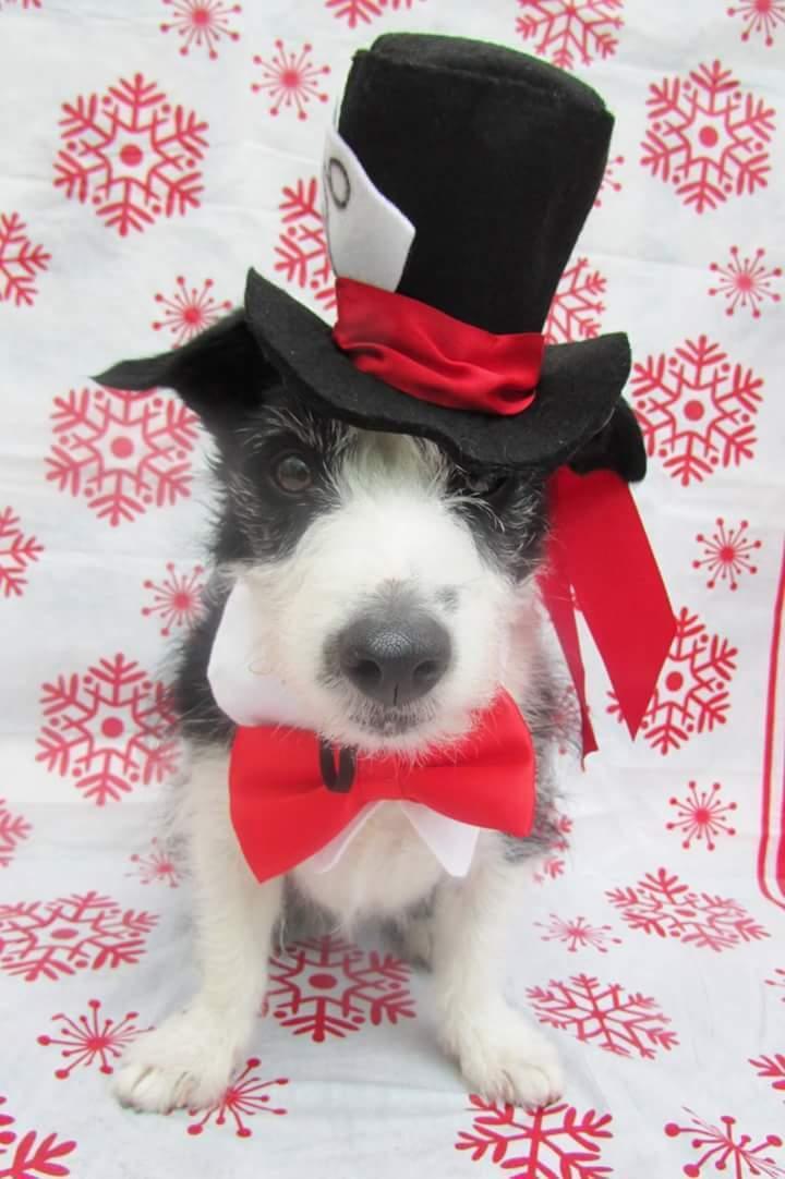 Mrs Nibbles Doggie Designs