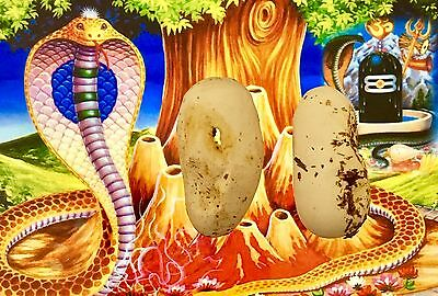 Naga Egg Direct from Temple - Power Rid Black Magic Ghosts Luck Wealth Healing