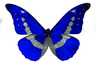 24 x Stunning Royal Blue Butterflies Edible Decorations Cup Cake Toppers Rice P (Royal Blue Cupcakes)