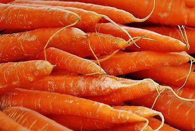 🥕 500 Samen Möhre Katrin frühe schnell wachsende Karotte Möhren Karotten