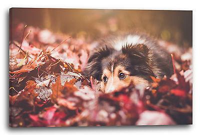 Lein-Wand-Bild Colli im Laub Herbst rote Blätter Tier-Bilder Hund Border-Collie ()