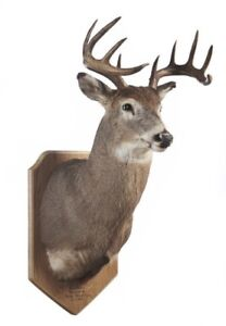 TAXIDERMY PURCHASED