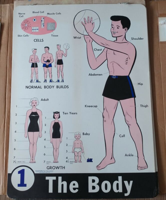 VNTG 1965 HUGE 8 Medical Human Body Physical Education Gym Health Charts
