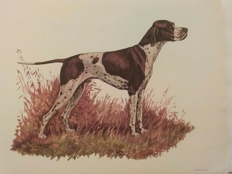 English Pointer Gundog Breed Lithograph Art Print by Ole Larsen 1950