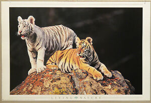 PRL-1998-TIGRI-TIGERS-LIVING-NATURE-VINTAGE-AFFICHE-PRINT-ART-POSTER-COLLECT