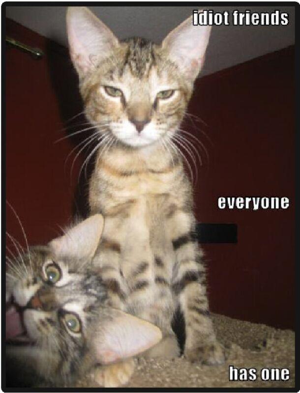 Funny Cat Humor Idiot Friends Refrigerator Magnet