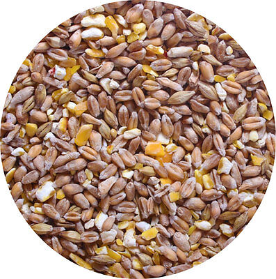 Mixed Corn 1.8kg POULTRY FEED Food A Great Food For Chicken Hen Duck Geese Etc