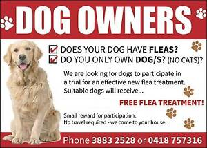 FREE FLEA TREATMENT - Be in a trial of a New Dog Flea Treatment! Brisbane North East Preview