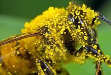 Training bees!! A bee C - honey to hive! Mona Vale Pittwater Area Preview