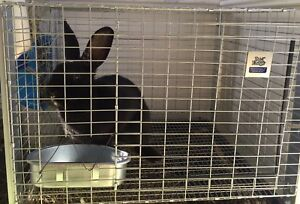 2 Bunnies & Cages