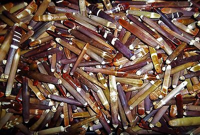 Lot Of Colorful 50 Sea Urchin Spine Quill With A Drilled Hole For Crafting
