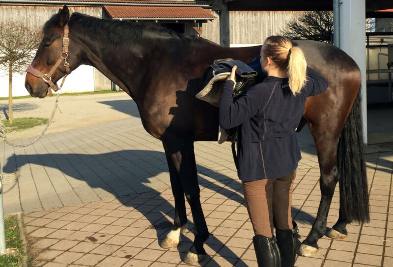 Das Zubehör fürs Pferd stellt die Reitschule - anlegen musst Du es aber selbst. (© Susanne Feiler)