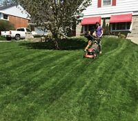 Milners lawn care. Grass cutting. Yard clean ups. & more