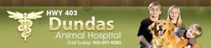 Affordable Vet Care at Hwy 403 & Dundas Animal Hospital