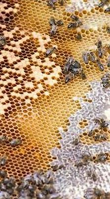 Complete BeeKeeping  300+ Books w/ Hive Plans Apiary Honey Apiculture Queen Bees