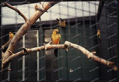 Foto-Stuttgart-Wilhelma-Bad-Cannstatt-Papagei-Gehege-Architektur-um-1985-41