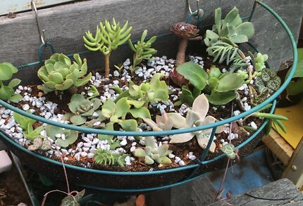 Plant sale. Sunday