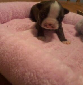 Small Miracles for puppies with birth defects