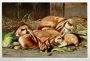 Rabbits-Lapins-Conigli-Signed-PC-Circa-1910-2